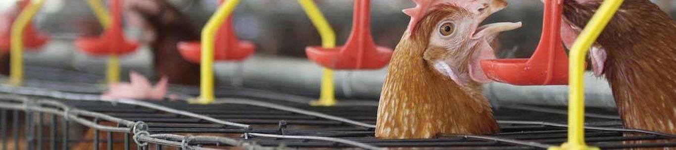TERVED POISID OÜ valdkond on liha- ja linnulihatoodete tootmine. Samas valdkonnas (EMTAK 10131) on tegutsevaid ettevõtteid 2021 aasta seisuga kokku 42 tükki, ke