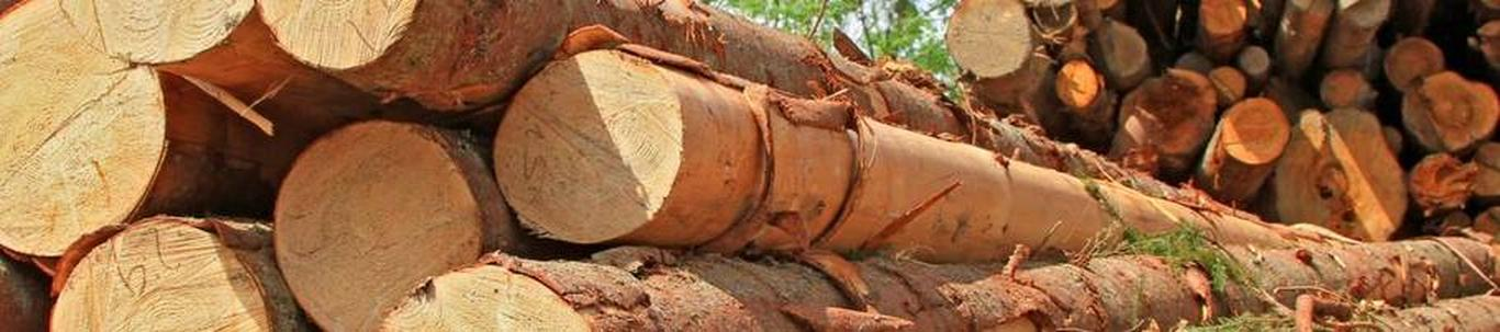 TARANT OÜ alustas peaaegu 9 aastat tagasi, mil juhatuse liige Ruben S. selle asutas, omades selleks ajaks ettevõtluskogemust ligikaudu 16 aastat. TARANT OÜ valdkond on puidu ja puidu esmatöötlustoodete hulgimüük.