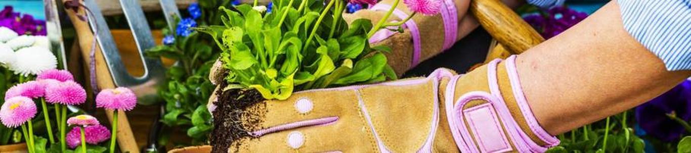 Sinu igapäevaseks tööks on hoolitsemine armsa lillepoe ja klientide eest.