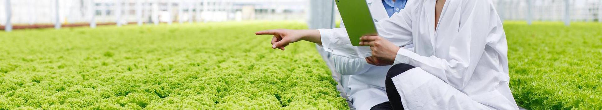 72111_teadustegevus-biotehnoloogias_26115900_xl.jpg