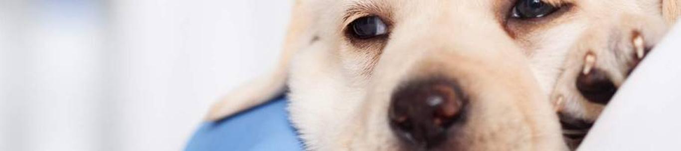 75001_veterinaaria_14592695_m_xl.jpg