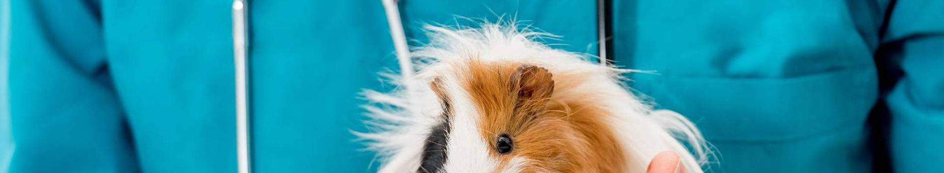 75001_veterinaaria_18438445_xl.jpg