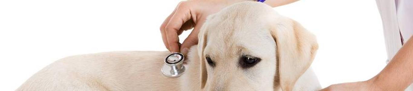 75001_veterinaaria_21414191_m_xl.jpg