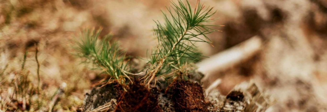 Meile on oluline, et puidust sünniks maksimaalne väärtus ning ...